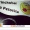 """Jueves de verano en """"La Pelotita"""" en Vegueta"""
